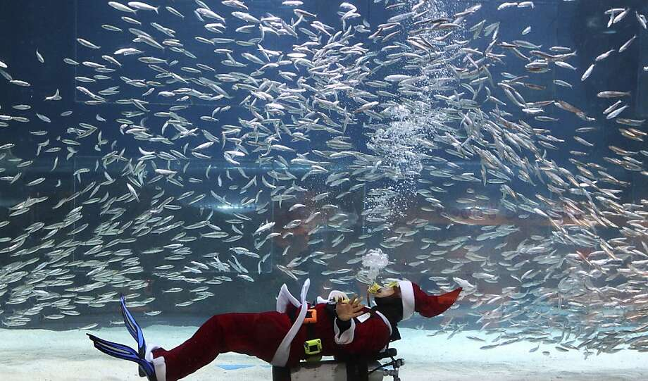 Santa sleeps with the fishes: It's OK, kids, he's just resting. Plus he's got an aqualung. Nothing to worry about. (Coex Aquarium Christmas show in Seoul.) Photo: Ahn Young-joon, Associated Press