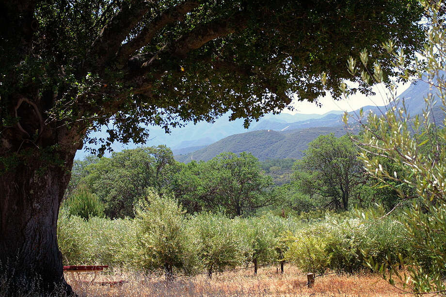 The 120-acre Sandy Creek Olive Ranch, part of a turn-of-the-century dairy ranch in eastern Carmel Valley, has more than 600 olive trees,  two cottages and a barn/workshop. Photo: Www.olive-ranch.com