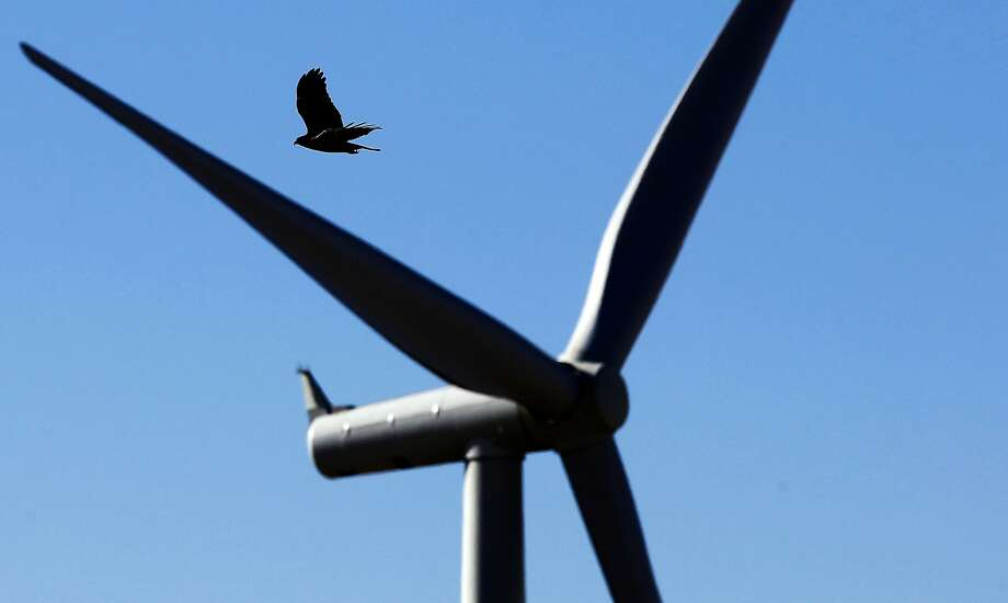 A Red-Tailed Hawk flies past a wind turbine on Monday Dec. 9, 2013, at a wind farm that sits on newly acquired property by the East Bay Regional Park District near Livermore, Ca.  A decision by President Obama to allow wind energy companies to kill eagles and birds for thirty years could have a significant impact on the Bay Area, where one of the country's deadliest collection of wind turbines sits on the Altamont Pass. Photo: Michael Macor, The Chronicle