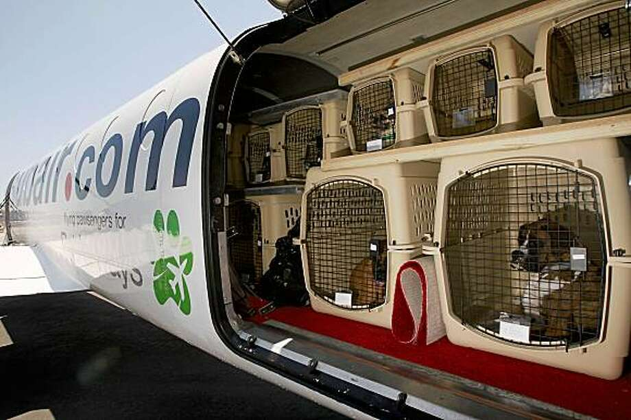 In 2009, Pet Airways launched with the aim of exclusively flying pets around the US. The novel idea seemingly crashed and burned when in 2013, the airline ceased operations and their website stopped working.Source: GlobalPets.eu Photo: David McNew, Getty Images