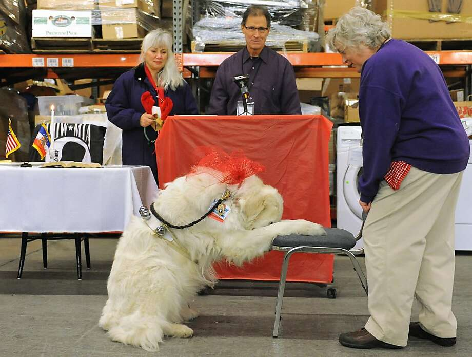 Are you sure his name isn't Prays? A therapy dog named Praise bows in prayer at a veterans appreciation day at Jezreel International in Colonie, N.Y. Jezreel provided new clothes, personal care and hygiene products, and Christmas toys for veterans. Photo: Lori Van Buren, Albany Times Union
