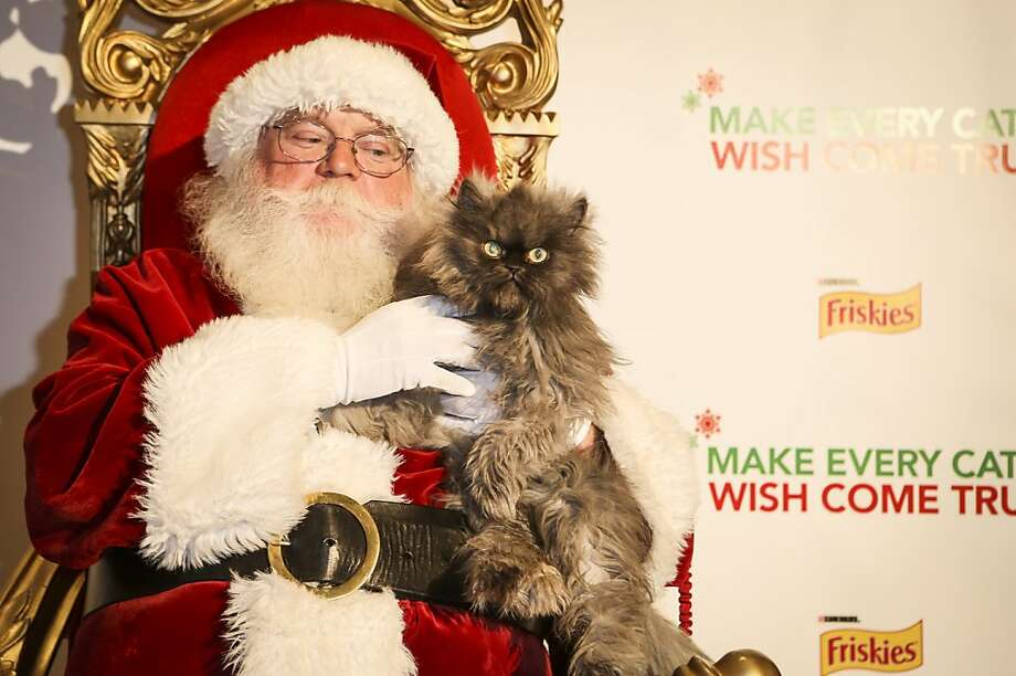 "And what else besides a trapped mouse do you want in your stocking, little boy? Colonel Meow, another Friskies cat promoting wet cat food, looks even grumpier than Grumpy Cat as endures a Santa photo call at the world premiere of ""Hard to Be a Cat at Christmas"" in Los Angeles. Photo: Bret Hartman, Associated Press"