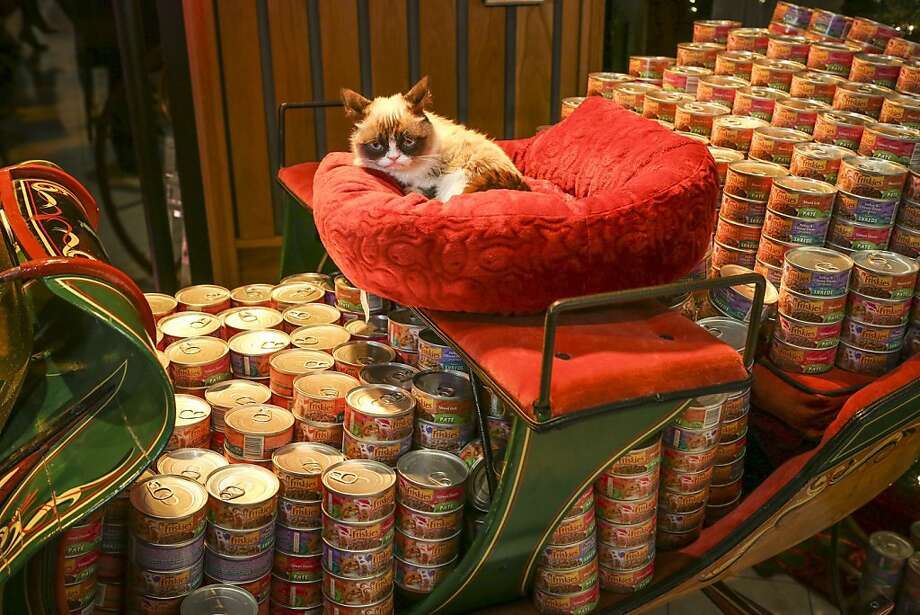 "I ONLY LIKE DRY! Friskies spokesanimal Grumpy Cat sits on a sleigh of cat food and waits for his mood to improve at the debut of the holiday music video ""Hard to Be a Cat at Christmas"" in Los Angeles. Photo: Bret Hartman, Associated Press"