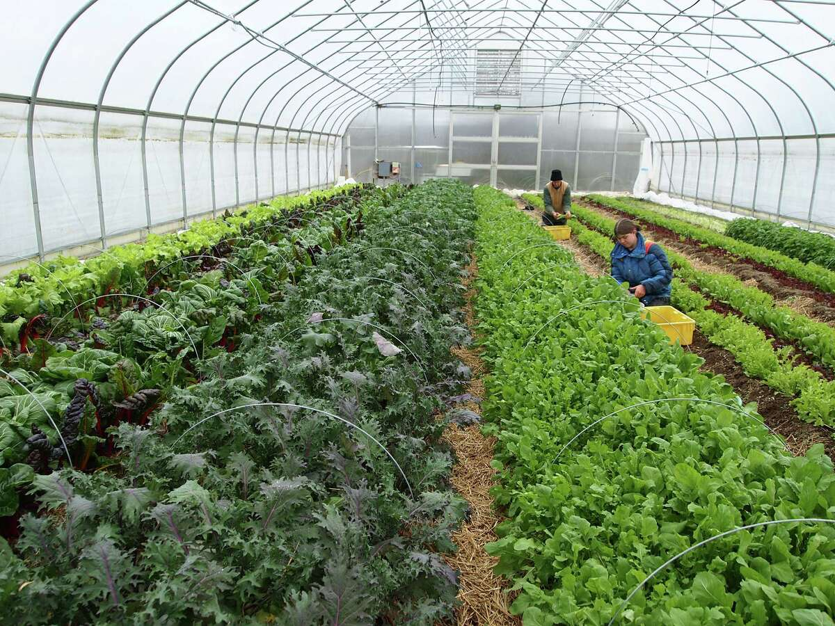 FILE--Sandy and Paul Arnold at Pleasant Valley Farm in Argyle use high tunnels to extend their growing season to year-round.