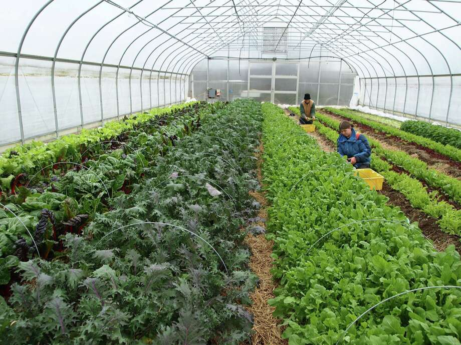 Sandy and Paul Arnold at Pleasant Valley Farm in Argyle use high tunnels to extend their growing season to year-round. (Sandy Arnold)