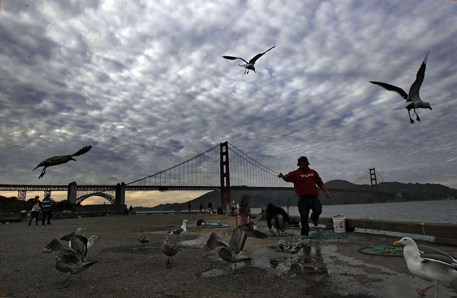 Gulls fight for a snack from fisherman on the Crissy Field pier under partly cloudy skies back in 2013. Forecasters expect similar cool temperatures in San Francisco and throughout the Bay Area on Tuesday. Photo: Michael Macor, The Chronicle