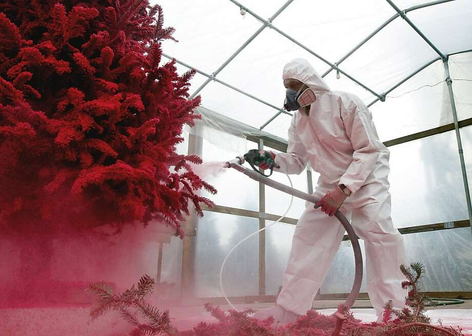 """Charles Banks flocks a Christmas tree in red at Charlie's Produce and Nursery in Yorktown, Va., Nov. 12, 2013. """"It's something different for Christmas,"""" he said, """"a new look."""" (Kaitlin McKeown/Newport News Daily Press/MCT) Photo: Kaitlin McKeown, McClatchy-Tribune News Service"""
