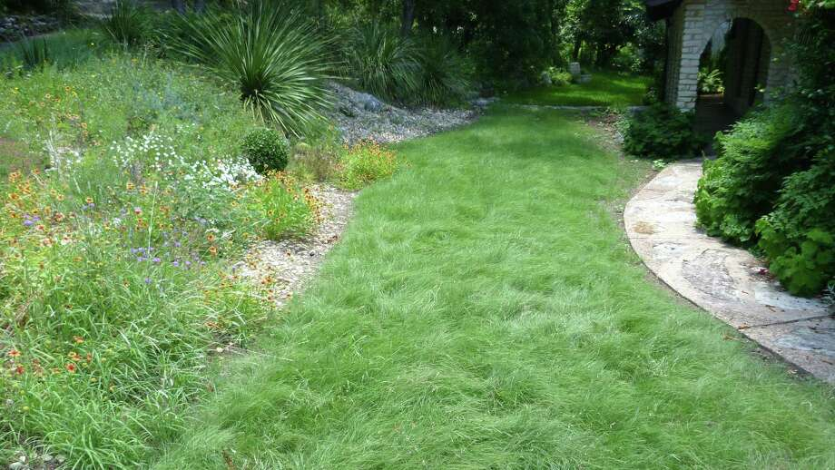 Habiturf, a blend of native grasses, is left tall as a groundcover and forms a wavy pattern in an Austin landscape. Photo: Courtesy Guy Thompson