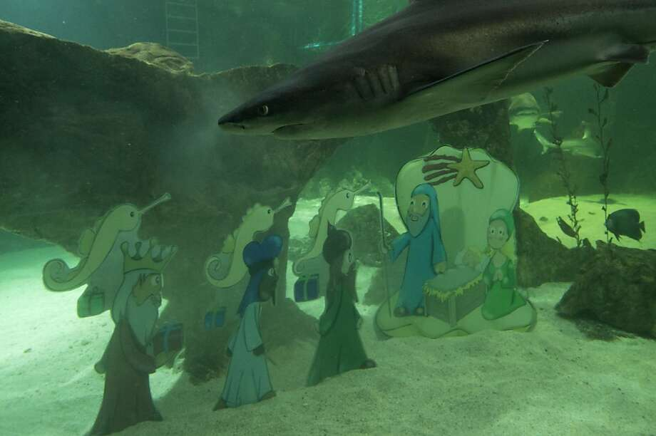 Stop drowning the baby Jesus, Spain! Of all the places to put a Nativity scene, a shark-infested aquarium in Madrid has to be one of the strangest. Photo: Paul White, Associated Press
