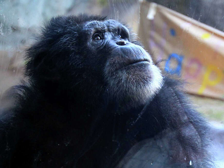 Houston Zoo. Photo: Mayra Beltran, Houston Chronicle / © 2013 Houston Chronicle