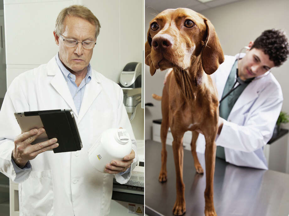 Pharmacist – $110,610 Veterinarian – $115,260 Photo: Getty Images Composite