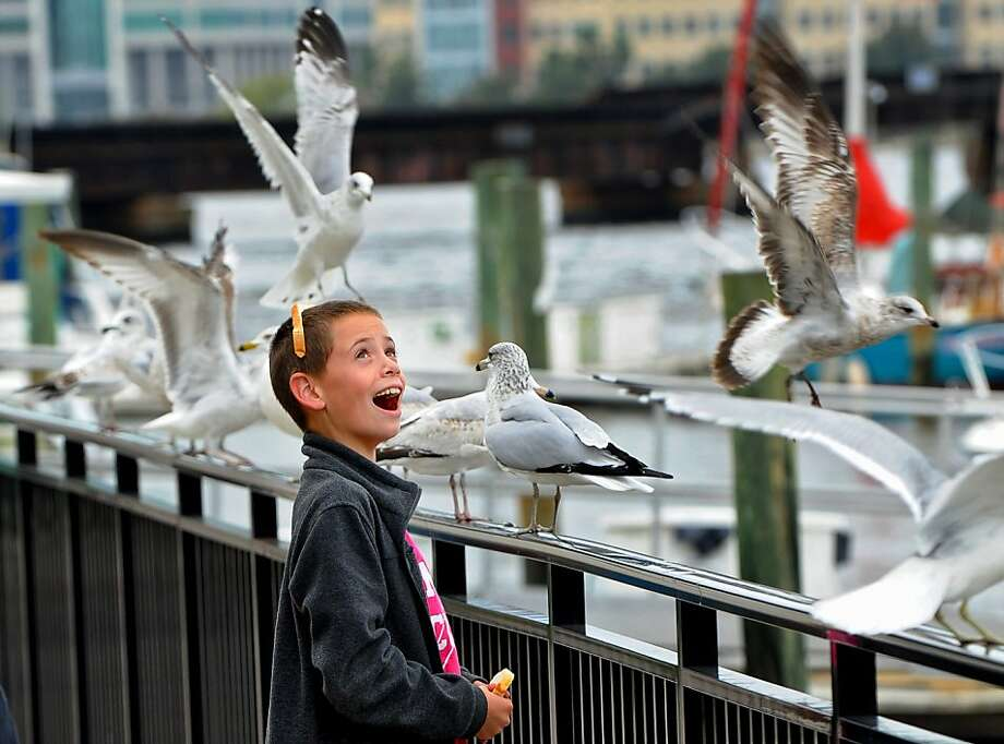 Surefire way for a boy to meet gulls:Ten-year-old Warren Chase puts bread on his head to make feathered friends along the Southbank Riverwalk in Jacksonville, Fla. Photo: Bob Mack, Associated Press