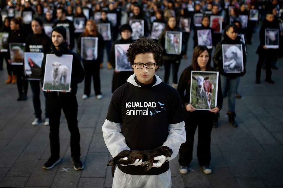 "An animal rights activist holds a dead cat body during a street performance in downtown Madrid, to protest unnecessary cruelty to animals in Spain on Saturday, Dec. 14, 2013. The animals displayed at the demonstration were discarded by animals farms and collected from waste bins. Writing on t-shirt reads in Spanish ""Animal Equality"". Photo: Andres Kudacki, AP / AP"