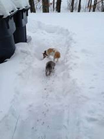 Maggie McCullen Sievert of Halfmoon provided a photo of a path she had to dig for her dogs after the Dec. 15, 2013 snowstorm (Facebook)