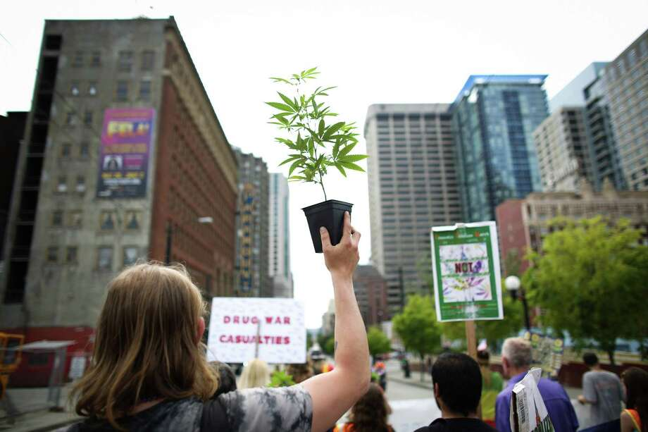"""May 11, 2013— A marcher hoists a marijuana plan during a """"prohibition funeral"""" celebrating the legalization of marijuana in Washington State. The marchers were also demanding more freedom for pot smokers and growers and an end to prohibition at a federal level. Photo: JOSHUA TRUJILLO, SEATTLEPI.COM / SEATTLEPI.COM"""