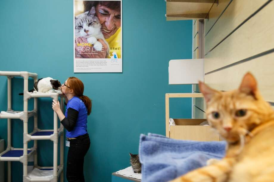 Ally Hard works to socialize a cat at the Friends for Life, Don Sanders Adoption Center, Dec. 11, 2013, in Houston.  The building is one of several real estate developments that are finalists in the Urban Land Institutes's 2013 Development of Distinction Awards. Photo: Michael Paulsen, Houston Chronicle