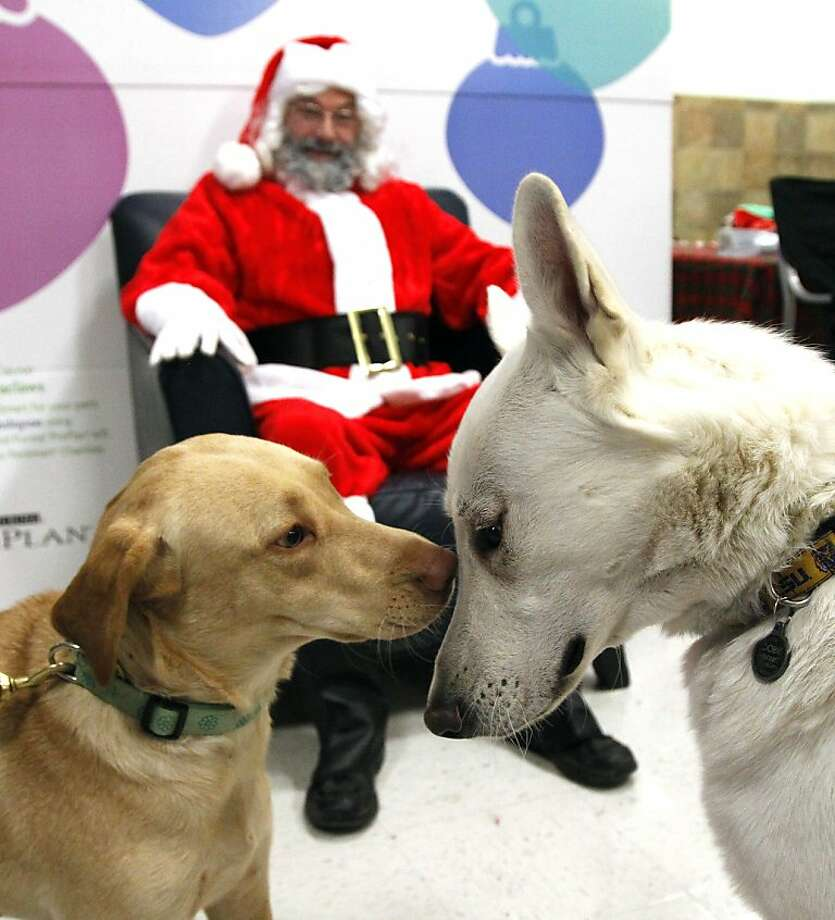 You better not growl, you better not howl:Maggie and Dobie attempt to prove to Santa that they belong on the nice list during a visit to Dallas PetSmart. Photo: Richard W. Rodriguez, Associated Press