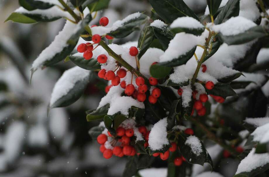 Snow falls on berries along Main Street in Danbury, Conn. on Tuesday, Dec. 17, 2013. Photo: Tyler Sizemore / The News-Times