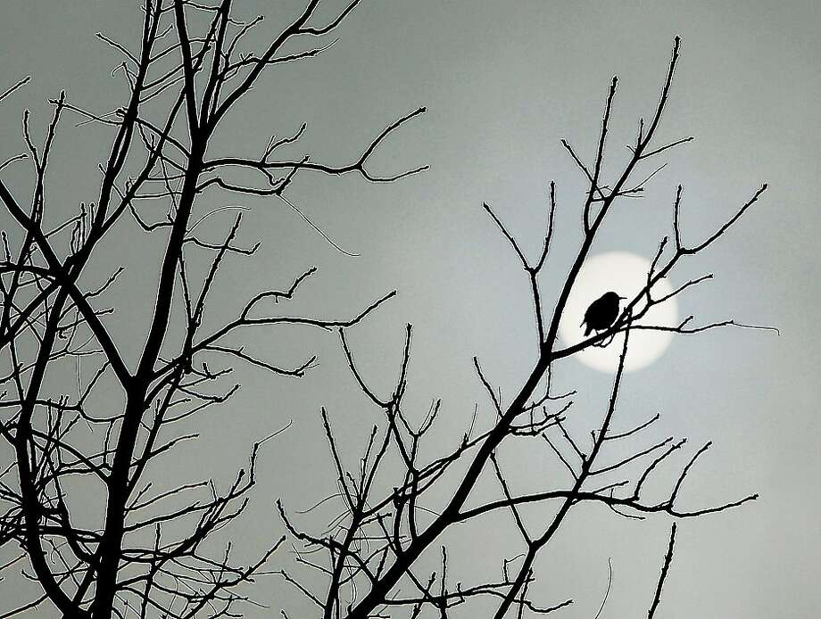 Black bird sitting: High, thin clouds blot out most of the sun in Alton, Ill., which was drying out after weekend 