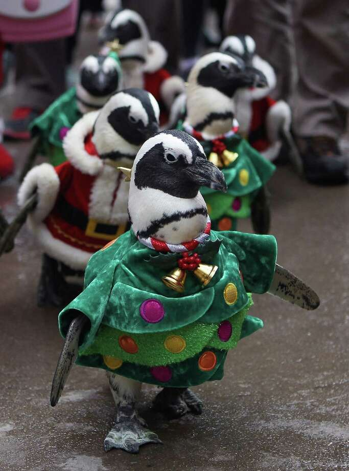 YONGIN, SOUTH KOREA - DECEMBER 18:  Penguins dressed in Santa and Christmas tree costumes are paraded at Everland, South Korea's largest amusement park on December 18, 2013 in Yongin, South Korea. Many Christian and non-Christian Koreans celebrate the holiday by exchanging gifts, caroling and participating in church services. South Korea is the only east Asian nation that recognises Christmas as a national holiday.  (Photo by Chung Sung-Jun/Getty Images) ORG XMIT: 458194737 Photo: Chung Sung-Jun, Getty / 2013 Getty Images