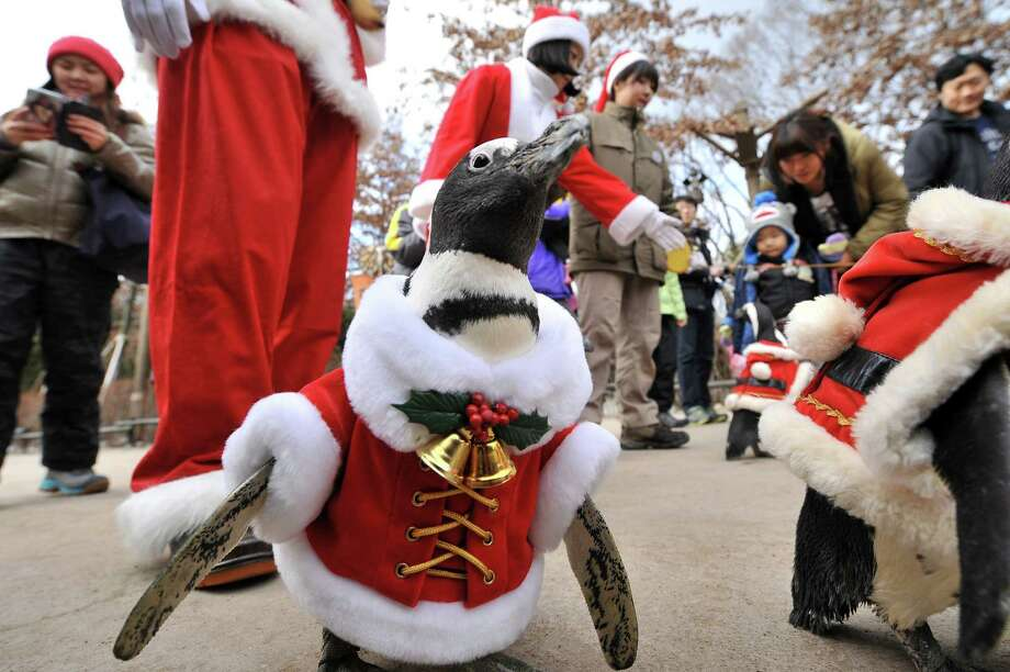 A penguin dressed in a Santa Claus costume is paraded at an amusement park for a promotional event ahead of Christmas in Yongin, south of Seoul, on December 18, 2013. Everland, South Korea's largest amusement park, organized the event to launch its Christmas festival season.      AFP PHOTO / Woohae CHOWOOHAE CHO/AFP/Getty Images Photo: WOOHAE CHO, Getty / AFP