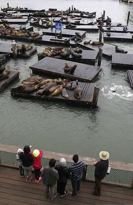 Seals and visitors seen outside of a window at Neptune's Waterfront Grill in San Francisco, Calif., on Tuesday, December 3, 2013.