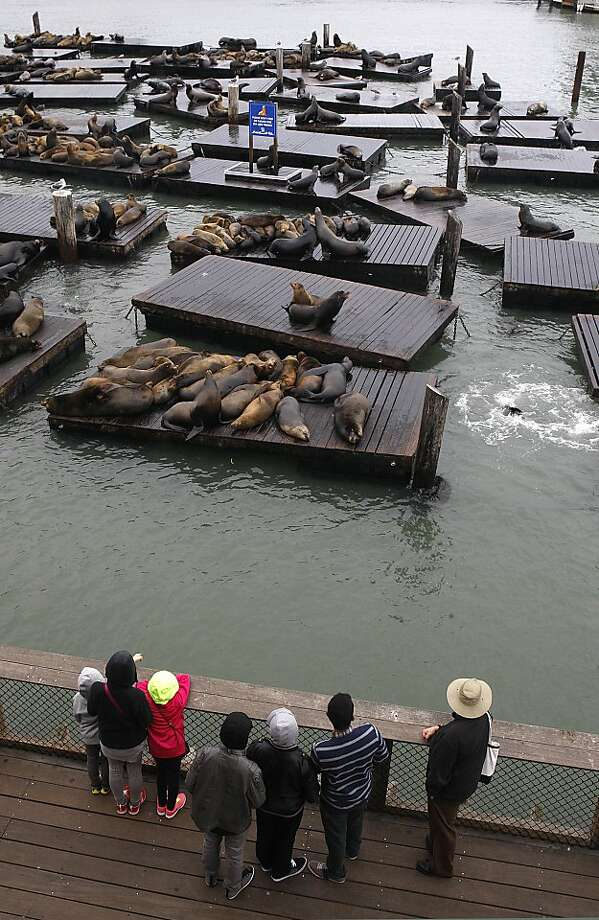 The view from Neptune's Waterfront Grill on Pier 39 includes plenty of sea lions - and tourists. Photo: Liz Hafalia, The Chronicle