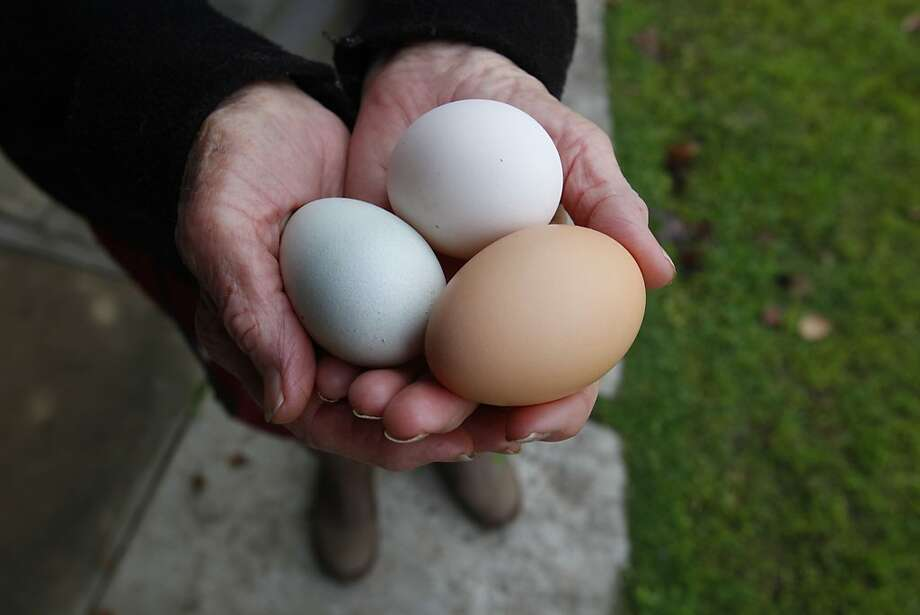 The Paleo Diet: This diet appeals to people who want to get more protein and build muscle. Eggs are one way to accomplish this. Photo: Michael Maloney, The Chronicle
