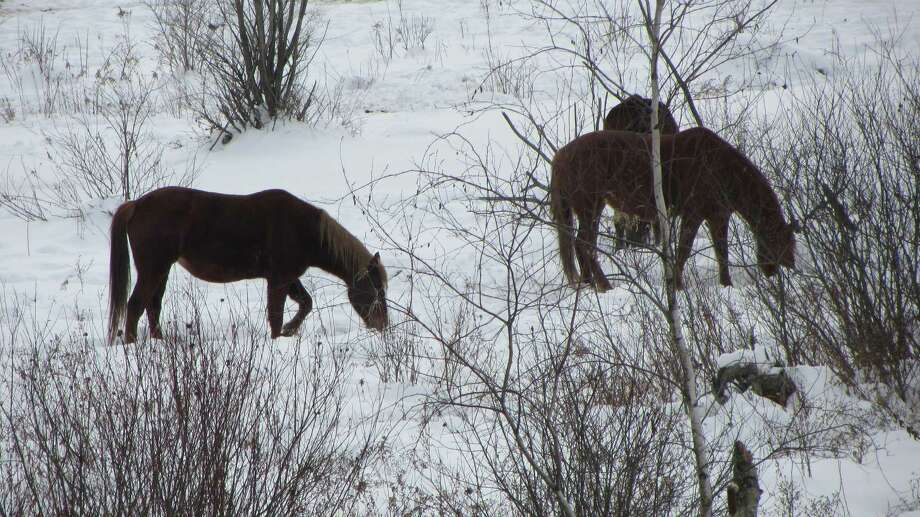 Horses are seen on the property formerly owned by Ann Arnold on Wilton Road in Greenfield. Her case was adjourned Friday morning. (Bob Gardinier / Times Union)