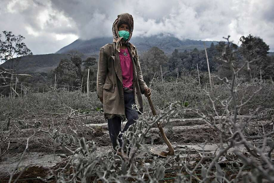 A woman stands in her field, which has been covered by ash from the eruption of mount Sinabung in Sigarang Garang village on November 25, 2013 in Karo district, North Sumatra, Indonesia. Mount Sinabung, which has been intermittently erupting since September, erupted eight times in just a few hours on Sunday. Officials have reported of rocks raining down over a large area, forcing thousands to flee their homes. The Indonesian government has called for people living within five kilometres (3.1 miles) of the volcano, on the northern tip of Sumatra Island, to evacuate their homes as the volcanology agency raised the alert level for the volcano to the highest point on a four-stage scale. Photo: Ulet Ifansasti, Getty Images