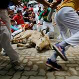Revellers run in to the bullring while a Fuente Ymbro's fighting bull lays on the ground during the eighth day of the San Fermin Running Of The Bulls festival on July 13, 2013 in Pamplona, Spain. The annual Fiesta de San Fermin, made famous by the 1926 novel of US writer Ernest Hemmingway 'The Sun Also Rises', involves the running of the bulls through the historic heart of Pamplona, this year for nine days from July 6-14.