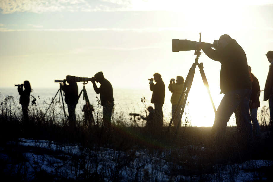 Bird watchers gather on the dunes to photograph a Snowy Owl that spent the afternoon on a fence post at Long Beach Park, in Stratford, Conn. Dec. 21, 2013. Photo: Ned Gerard / Connecticut Post