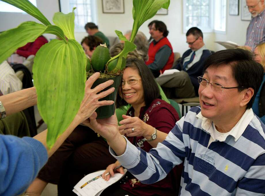 Jimmy Yu, right, gets a plant he won during Saturday's orchid auction at the Bartlett Arboretum hosted by the North East Judging Center of the American Orchid Society on December 21, 2013. Photo: Lindsay Perry / Stamford Advocate
