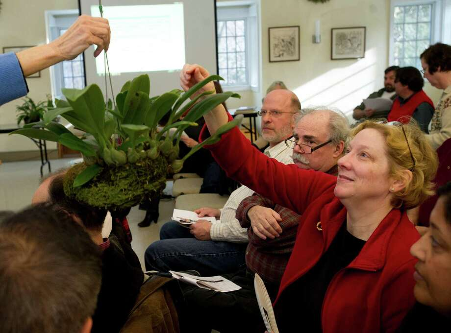 Carrie Buchman gets a plant she won during Saturday's orchid auction at the Bartlett Arboretum hosted by the North East Judging Center of the American Orchid Society on December 21, 2013. Photo: Lindsay Perry / Stamford Advocate