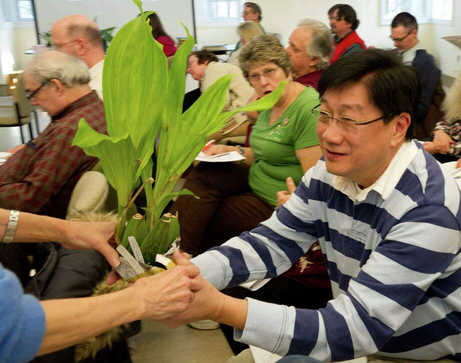 Jimmy Yu gets a plant he won during Saturday's orchid auction at the Bartlett Arboretum hosted by the North East Judging Center of the American Orchid Society on December 21, 2013. Photo: Lindsay Perry / Stamford Advocate