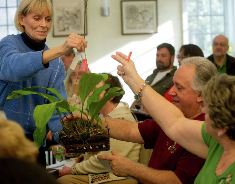 Carrie Raven hands a plant to Larry Desiano and Joan Messander of the Deep Cut Orchid Society in central New Jersey during Saturday's orchid auction at the Bartlett Arboretum hosted by the North East Judging Center of the American Orchid Society on December 21, 2013. Photo: Lindsay Perry / Stamford Advocate