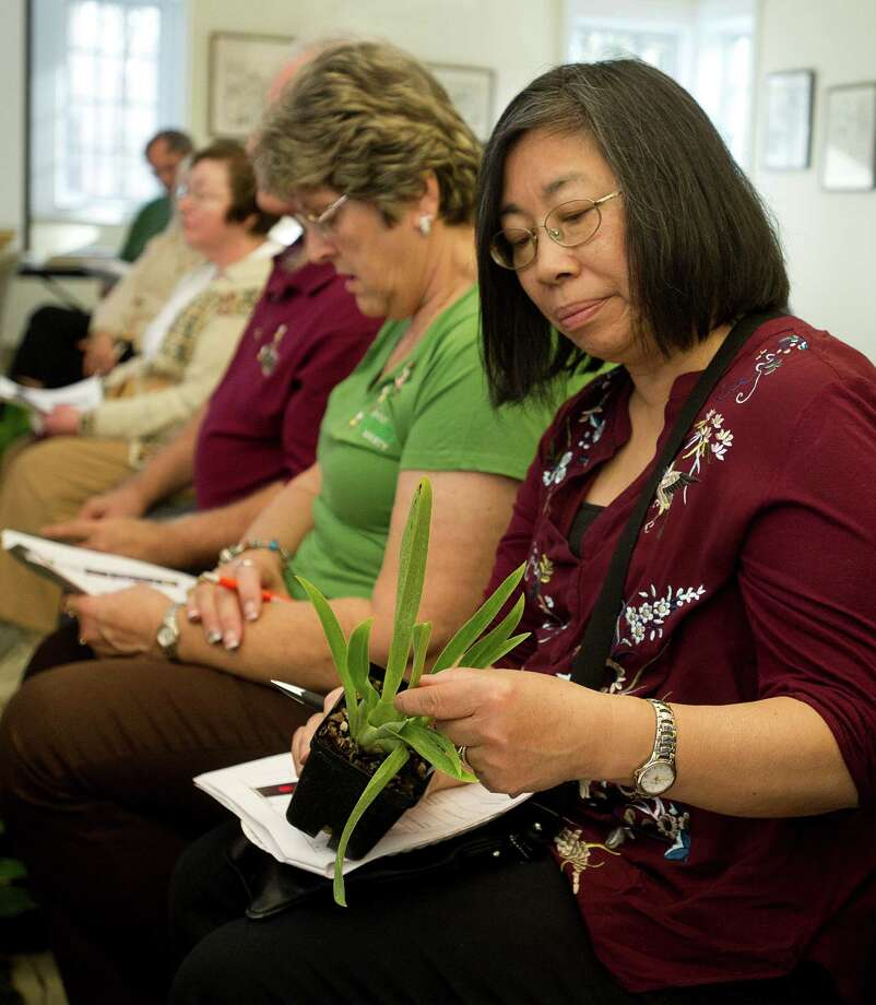 Mae Campbell looks at a plant she won during Saturday's orchid auction at the Bartlett Arboretum hosted by the North East Judging Center of the American Orchid Society on December 21, 2013. Photo: Lindsay Perry / Stamford Advocate