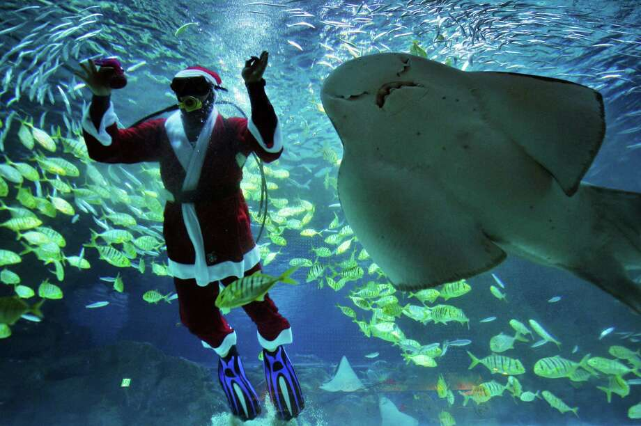 A diver dressed in a Santa Claus costume swims with fish at the Coex Aquarium in Seoul on December 20, 2013. The aquarium runs the event during the Christmas season. Photo: WOOHAE CHO, AFP/Getty Images / AFP