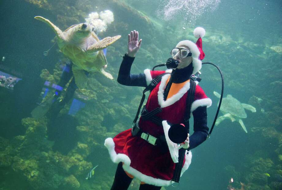 A diver dressed as Santa swims in a turtule aquarium of the Oceanographic Museum in Stralsund on December 16, 2013. Photo: STEFAN SAUER, AFP/Getty Images / DPA