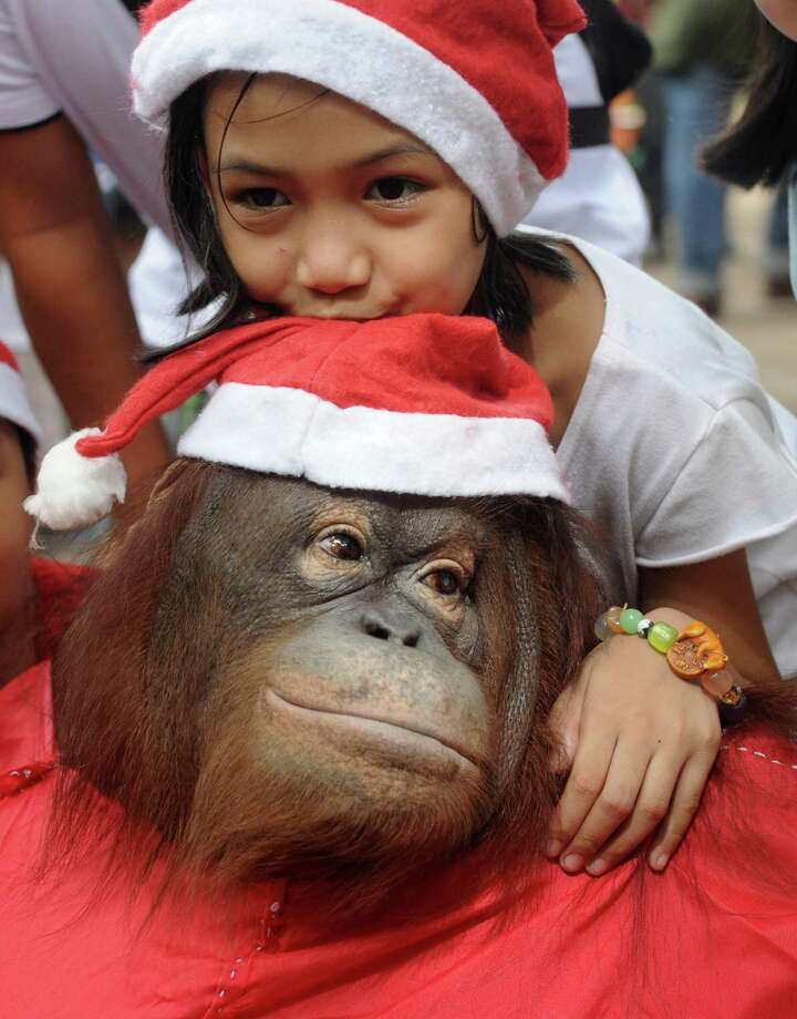 "An orangutan named ""Pacquiao"" wears a Santa costume as a child poses with it at the start of Christmas-themed events at the Malabon Zoo, suburban Manila on December 15, 2013. Tangco said that survivors of Super Typhoon Haiyan that ravaged the central Philippines on November 8, will get free entrance to the zoo from December 16-18 upon presentation of their identity documents. Photo: JAY DIRECTO, AFP/Getty Images / AFP"