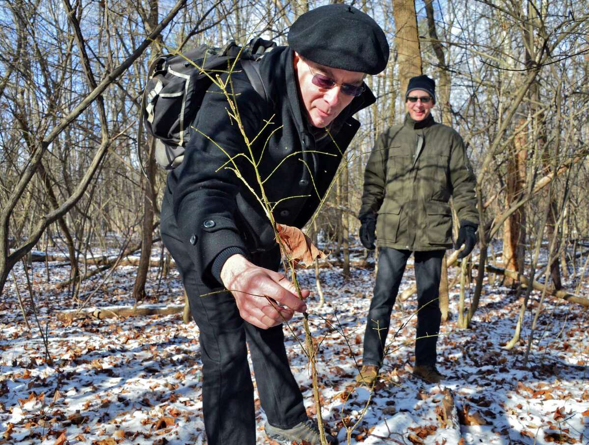 Tom Denny, left, and Rick Fenton of Sustainable Saratoga point out burning bushes in the Skidmore Campus North Woods Thursday, Dec. 12, 2013, in Saratoga Springs, N.Y. (John Carl D'Annibale / Times Union)