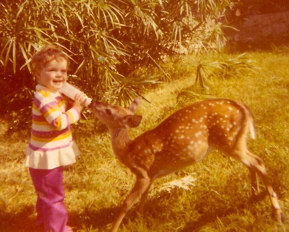 "Then: After I saw the recent EN article on wildlife pets I remembered when we found an abandoned fawn hung up in a fence and adopted it.  My daughter Amy was then 2 in 1970.  We named the fawn ""Dawn"" and it finally roamed free but came up to us when we'd call her.  At the time we lived on 10 acres on Scenic Loop Road in Leon Springs. Photo: Courtesy Photo / Marlene Richardson"