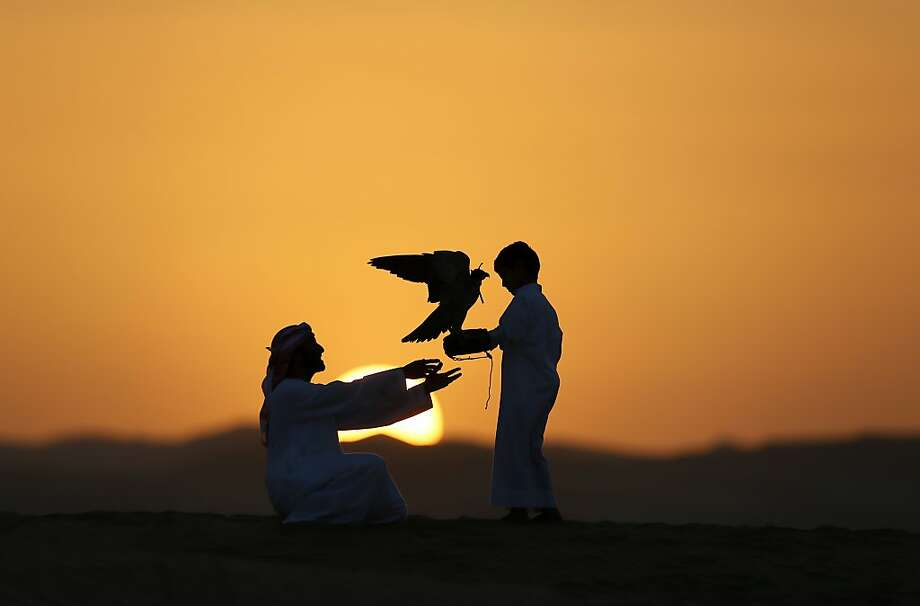 TOPSHOTS Emirati Mohammed Rakan Bin Harwon Al-Qubassiy (L) hands his falcon to a boy at the Liwa desert, 220 kms west of Abu Dhabi, on the sidelines of the Mazayin Dhafra Camel Festival on December 21, 2013. The festival, which attracts participants from around the Gulf region, includes a camel beauty contest, a display of UAE handcrafts and other activities aimed at promoting the country's folklore. AFP PHOTO/KARIM SAHIBKARIM SAHIB/AFP/Getty Images Photo: Karim Sahib, AFP/Getty Images