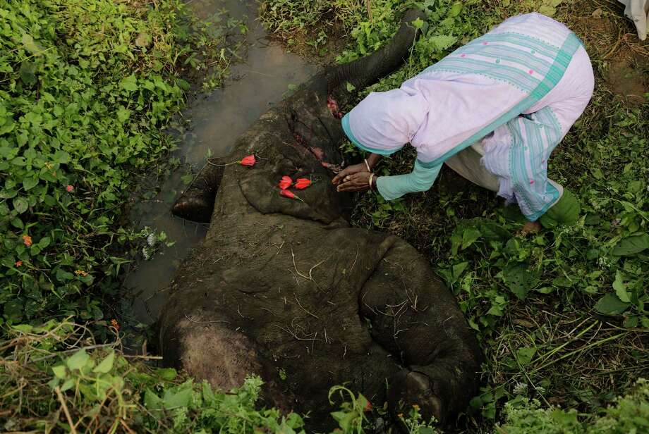 An Indian village woman offers prayer to a dead elephant near Deepor Beel wildlife sanctuary on the outskirts of Gauhati, India, Friday, Dec. 20 2013. The female wild elephant, estimated at around 5 years of age, died after being hit Thursday night by a goods train, as an elephant herd was crossing a railway track. Photo: Anupam Nath, AP / AP2013