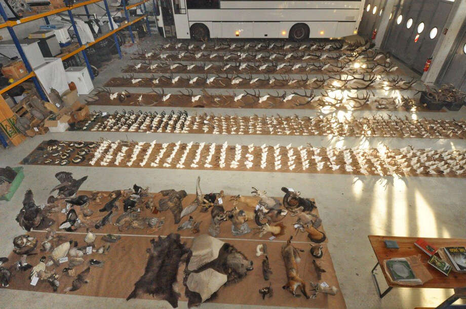 This picture provided by the Police Department of Lower Austria (Landespolizeidirektion Niederoesterreich) shows trophys police found at the poacher's house, who killed four people and then himself. Police say nearly 100 other crimes that caused estimated damages and losses valued around 10 million euros (nearly US dollar 14 million). Police published their conclusions Thursday, Dec. 19, 2013, three months after Alois Huber, 55, killed three policemen and a paramedic after police tried to question him. He then barricaded himself on his farm before setting fire to his hideout and shooting himself in the head. Photo: Uncredited, AP / AP2013