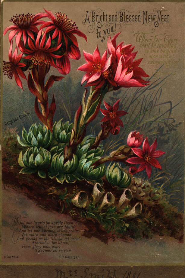 Flowers are featured on this New Year's greetings card from  C. Caswell, circa 1881. Photo: Hulton Archive, Getty Images / Hulton Archive