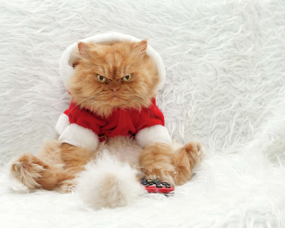 Try putting your cat in a Santa suit and see if he looks any happier than this guy. Photo: Hulya Ozkok, Getty Images / Flickr RF