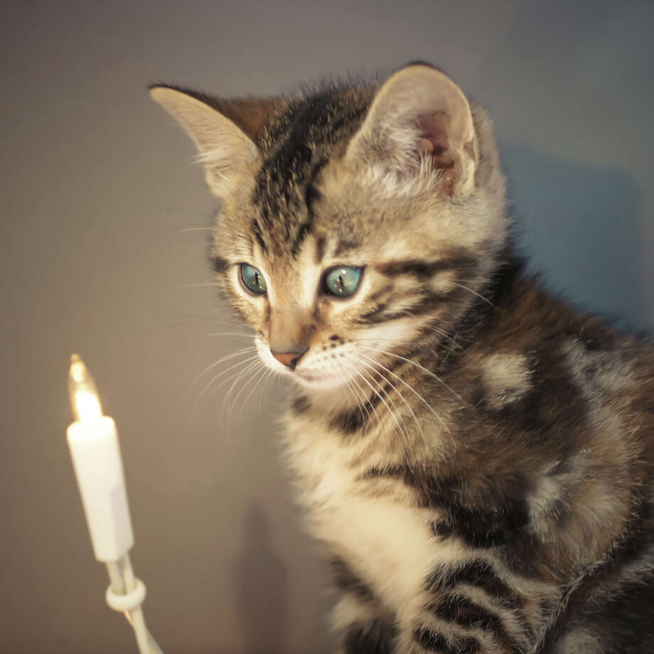 "This cat's too young to have seen what happens to the cat in ""Christmas Vacation."" Photo: Elly Schuurman, Getty Images / Flickr Open"