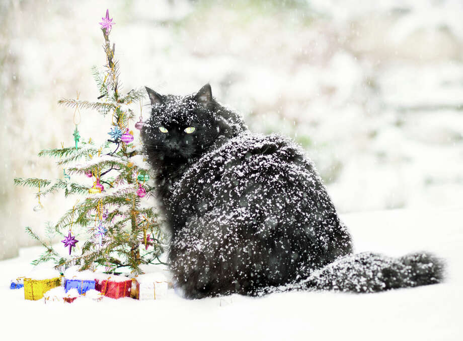 Snow is just frozen water. And you know how cats feel about water. Photo: Nancy Rose, Getty Images / Flickr RM