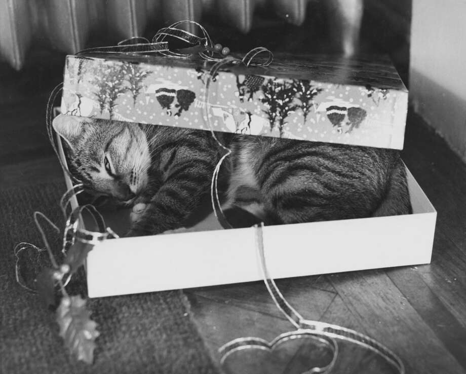 Forget the presents. Your cat wants the box. Photo: R. Gates, Getty Images / 2010 Getty Images